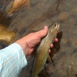 44648530_Bear River Cutthroat