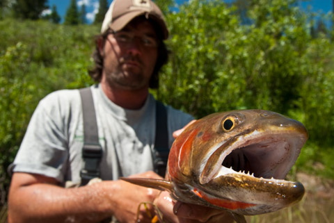 Bonneville Cutthroat Trout close up