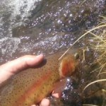 Lars Rasmussen Colorado River Cutt